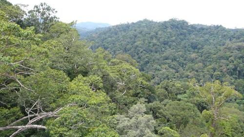 Thu, 03/13/2008 - 11:10 - Overlooking Kuala Belalong Forest. Credit: CTFS