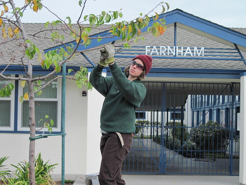 Farnham Elementary School Tree Maintenance 12-31-2009 | by Our City Forest