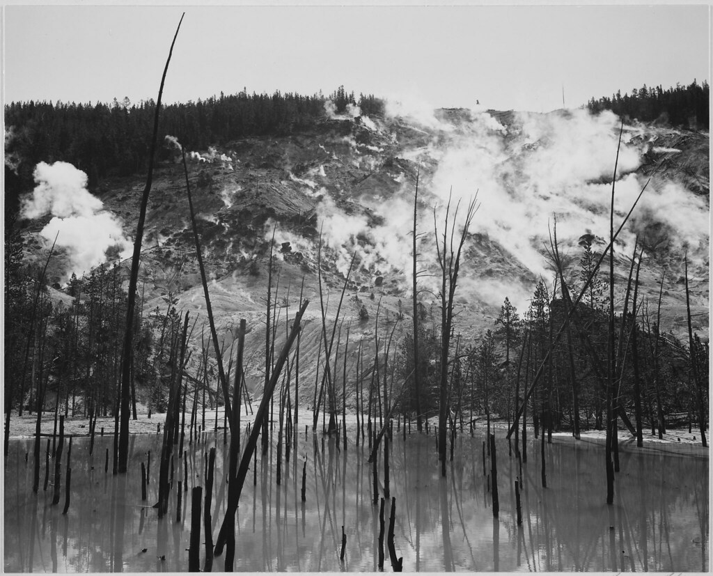 """Barren tree trunks rising from water in foreground, stream rising from mountains in background, """"Roaring Mountain, Yellowstone National Park,"""" Wyoming."""