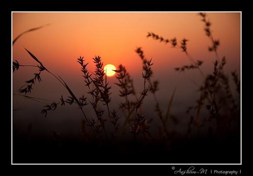 flowers sun flower fern sunrise landscape dawn flora nikon scene ferns d90 chaturshringi nikond90 18105vr anshummandore anshumm