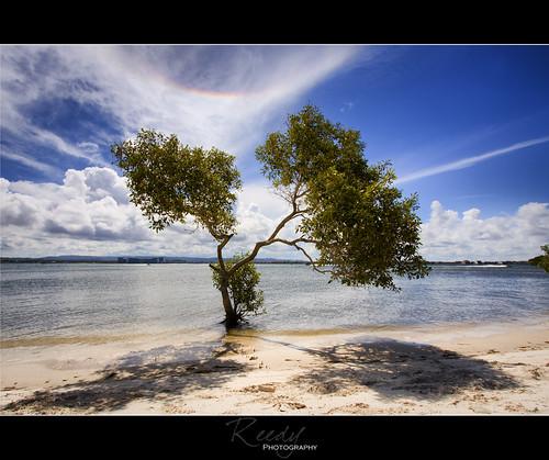 water clouds rainbow arc mangrove epic southstradbrokeisland canon1022mm circumzenith reedyphotography