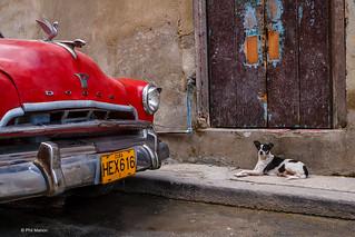 doggie & Dodge - Havana, Cuba | by Phil Marion