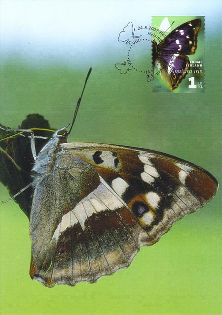 Finland Maxi Card Butterfly Postcard