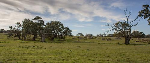 trees outcrop grass landscape horizon australia victoria flowersplants woodlandspark greenvale