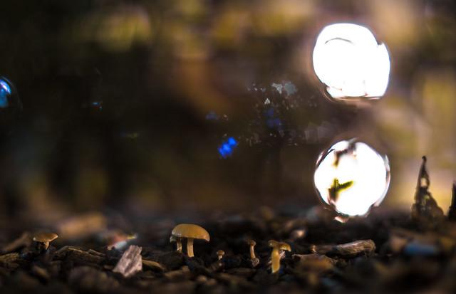 Mushroom @ 1.2
