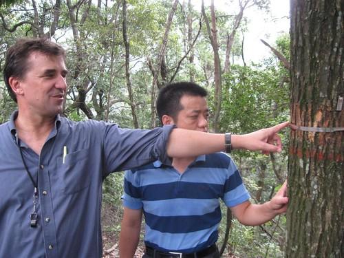 Sat, 09/19/2009 - 22:30 - Stuart Davies and Mi Xiangcheng inspecting dendrometer band.  Credit: CTFS
