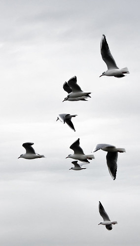 Flock of Seagulls   by Hexagoneye Photography