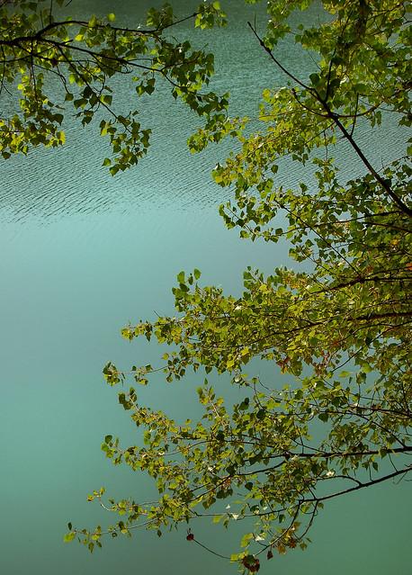Lac de Carcès - Harmonie verte - Carcès - (Var)