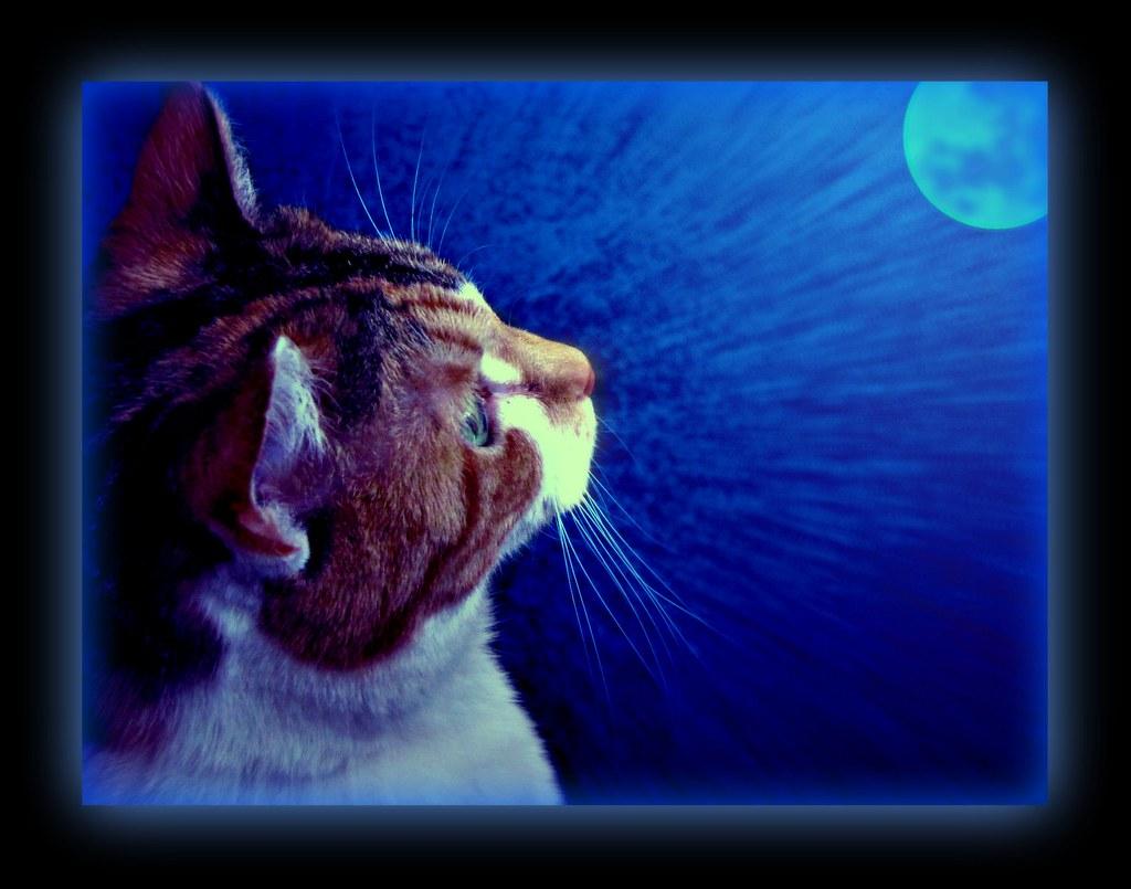 "Blue Moon | New Years Eve , Dec. 31 , 2009 -"" blue moon ...  Blue Moon | New..."