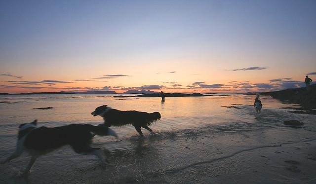 Sunset Beach Dogs....
