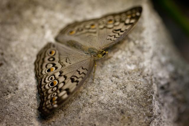 Butterfly Palace 5815