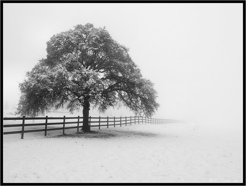 california lighting winter blackandwhite bw white snow storm tree monochrome fog clouds fence landscape vanishingpoint blackwhite haze oak scenic olympus pa pasture e3 centralvalley eldoradocounty californialandscape zd 1260mm olympuse3