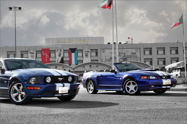 blue horses ~!!..