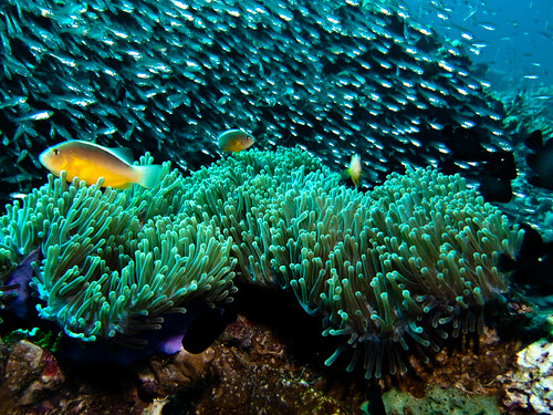 2010 Thailand Koh Phi Phi & Lanta scuba diving | by Ilse Reijs and Jan-Noud Hutten