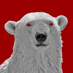 bear-red