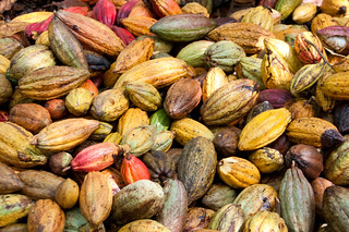 Mazorcas de Cacao   by mdelcid