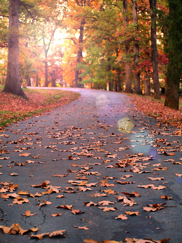 road trees light sunset orange color green yellow warm path twist trail flare trunks curve