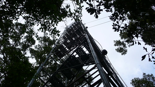 Wed, 09/30/2009 - 14:25 - Canopy access and meteorological tower near 25-ha plot.  Credit: CTFS