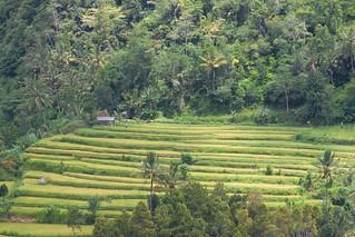 Rice Plantations and scenery near Besakih | by Bertrand Duperrin