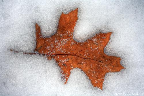 winter snow outdoors photography leaf michigan hdr mandj98 jmpphotography jamesmarvinphelps riverviewmichigan
