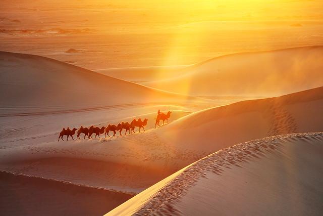 内蒙古额济纳旗八道桥、沙漠骆驼; Inner Mongolia Eji'na 8 bridge, desert camel