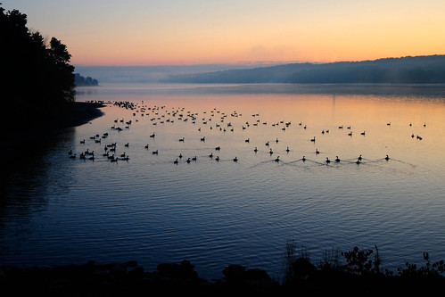 lake sunrise dawn geese nikon dam serenity doylestown chalfont galena d300 peacevalley