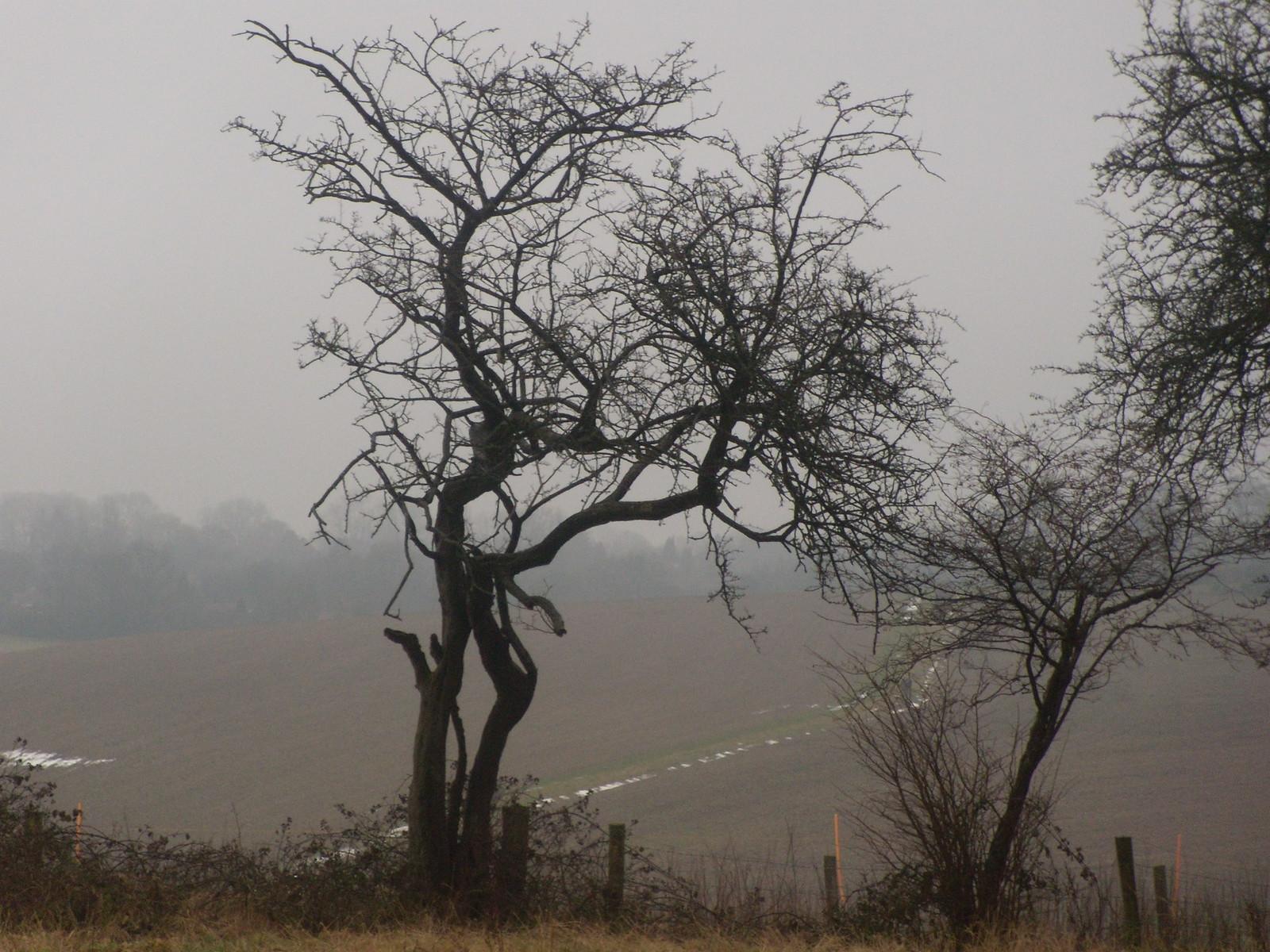 Trees DSCN8669 Chorleywood to Chesham