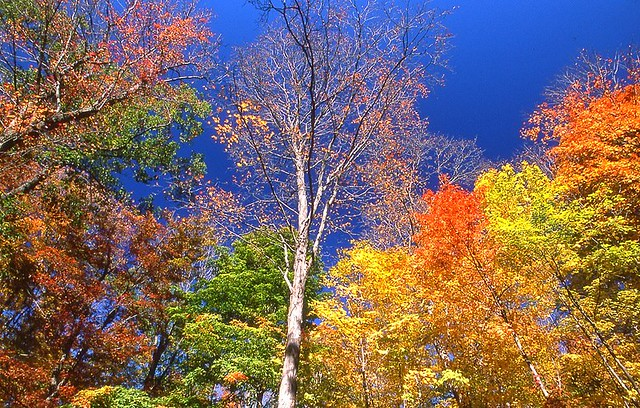 Fall is a Many Splendid Thing...
