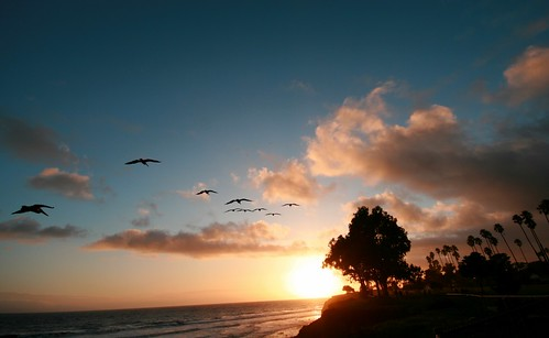 california ca sunset birds santabarbara clouds flock pelican palmtrees shorelinepark sigma1020mm 365project canonrebelxti