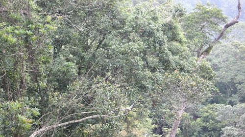 Wed, 09/30/2009 - 13:49 - View across the Lienhuachih forest. Credit: CTFS
