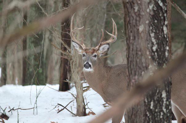 deer23