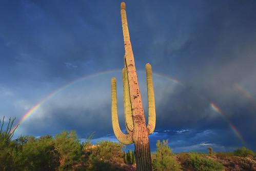arizona cactus storm nature canon landscape rainbow desert monsoon saguaro wickenburg wickenburgaz 40d fullrainbow vanessakerrprice