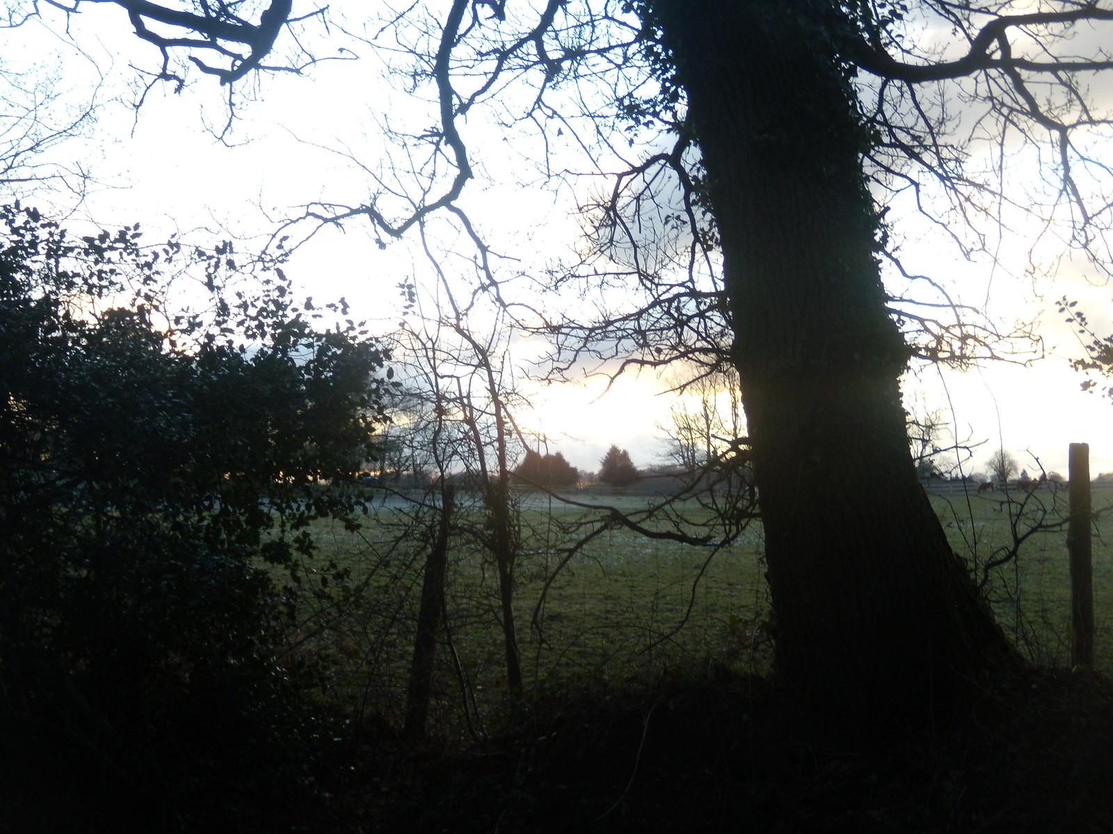 Tree silhouette DSCN8330 Haslemere Round Walk