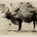 Manuel R. Bustamante Photographs