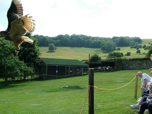 179_28-07-2005_iow_appuldurcombe_owl_&_falconry_centre   by Sleepless in Somerset