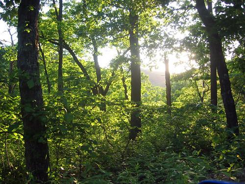 appatrip roadtrip mo missouri marktwainnationalforest ozarks geotagged geolat3652 geolon9382
