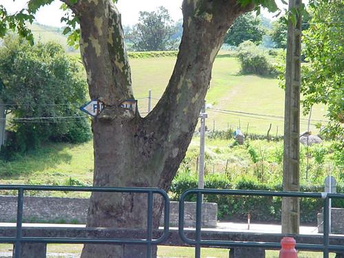 cartel devorado por un árbol