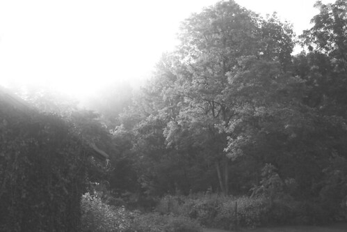 dawn morning sunrise garden vegetablegarden ivy trees puzzletown pennsylvania blackandwhite bw greyscale grayscale