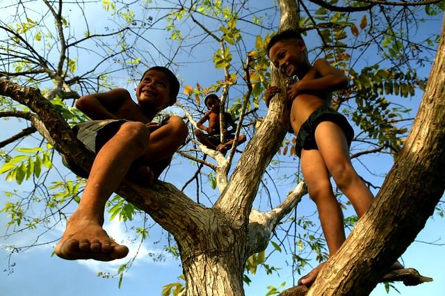 3 monkeys in a tree