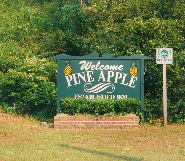 Welcome to Pine Apple
