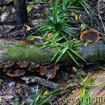 06 Viajefilos en Australia, Eungella NP 002