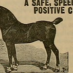 "Image from page 265 of ""Breeder and sportsman"" (1882)"