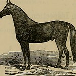 "Image from page 177 of ""Breeder and sportsman"" (1882)"