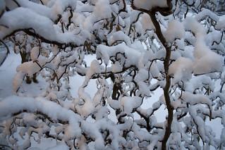 snowmageddon: harry lauder's walking stick   by woodleywonderworks