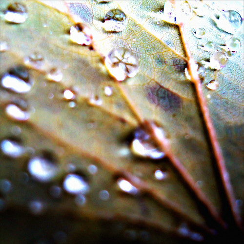 Dew Fall (10 of 10) | by RichTatum