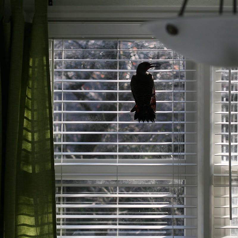 Bird Flew Down the Chimney