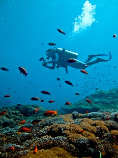 Scuba diving Bali Nusa Lembongan | by Ilse Reijs and Jan-Noud Hutten