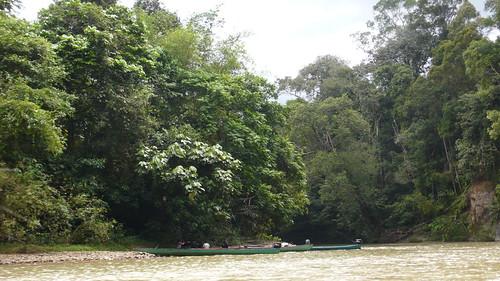 Thu, 03/13/2008 - 13:37 - River access to Kuala Belalong 25-ha plot. Credit: CTFS