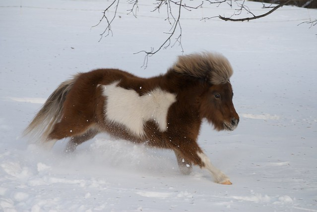 Ginger Powers Through The Snow