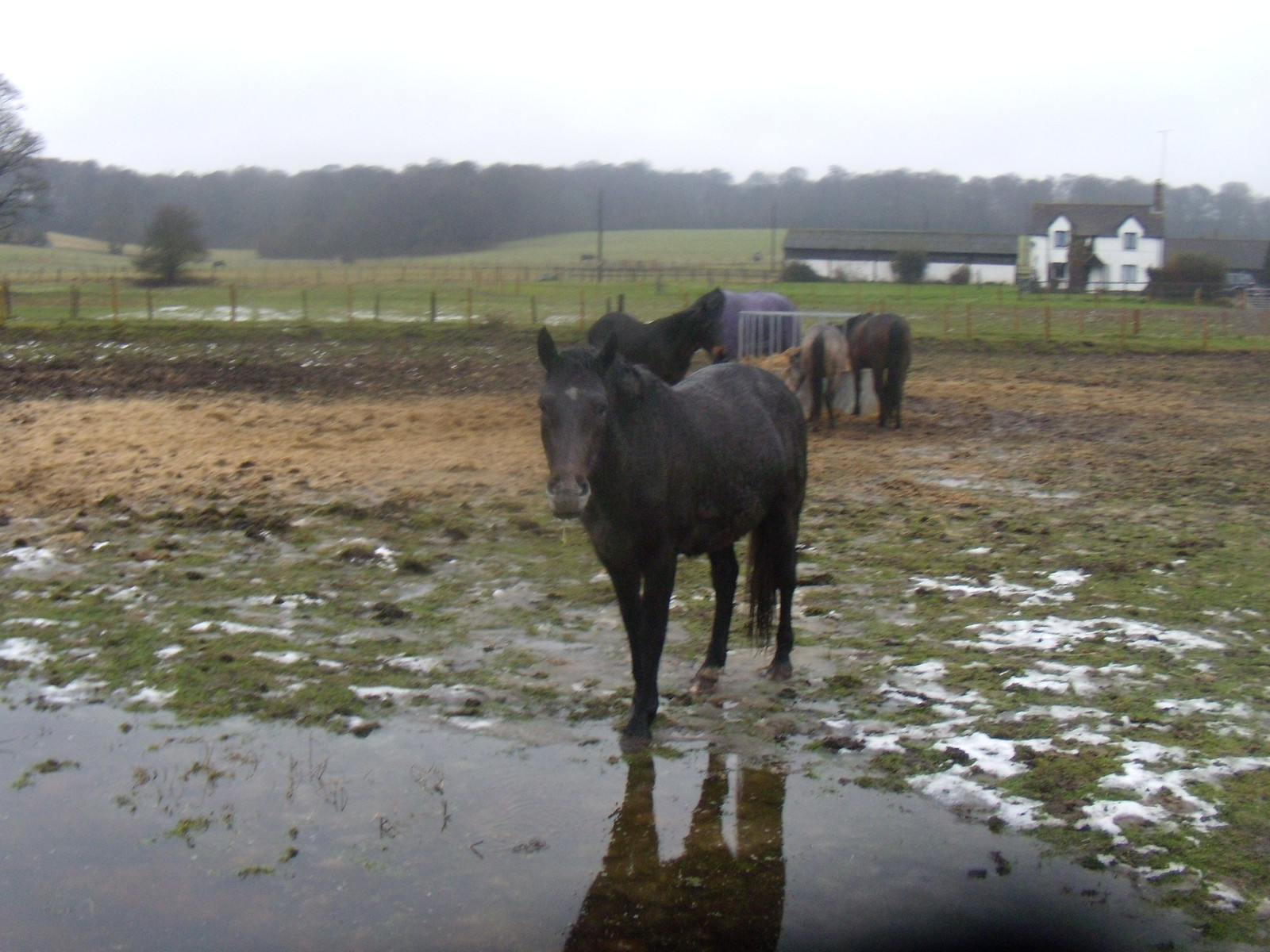Horse DSCN8586 Chorleywood to Chesham